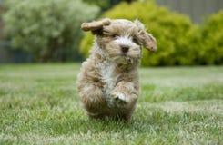 Puppy in het park Stock Foto's