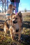 Puppy in het Park Stock Afbeeldingen