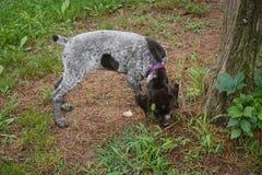 Puppy het snuiven grond stock afbeeldingen