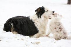 Puppy het spelen met oudste  Royalty-vrije Stock Foto