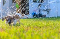 Puppy het spelen met water op het gras stock foto's
