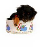 Puppy in het Tin van Kerstmis Stock Foto