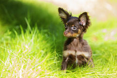 Puppy is hiding in the green grass Royalty Free Stock Photography