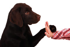 Puppy High 5 Stock Photos