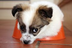 Puppy in his bowl Stock Images