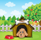 A puppy and his dog food. Illustration of a puppy and his dog food Stock Photo
