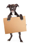 Puppy Holding Blank Cardboard Sign Royalty Free Stock Photo