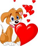 Puppy holding a red heart in her mouth Royalty Free Stock Photos