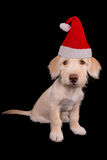 Puppy in holiday hat Stock Photos