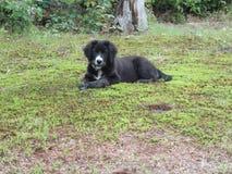 Puppy, Hond, Border collie, Collie, Zwarte, Wit, buiten, Gras, Rozen royalty-vrije stock foto