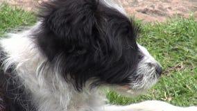 Puppy, Honden, Hoektanden, Huisdieren, Dieren stock video