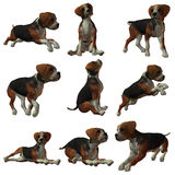 Puppy Hound Stock Photos