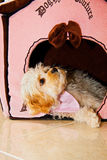 Puppy House. Cute puppy checking out his house Stock Images