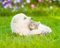 Puppy hugging a kitten on the green grass Stock Images