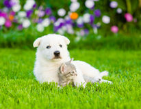 Puppy hugging kitten on green grass Royalty Free Stock Photography