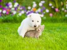 Puppy hugging kitten on green grass. Focus on cat Royalty Free Stock Photography