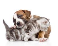 Puppy hugs scottish kitten. isolated on white background Stock Photo
