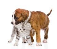 Puppy hugs scottish kitten. isolated on white background Stock Photography