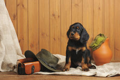 Puppy and hunting accessories Royalty Free Stock Photography