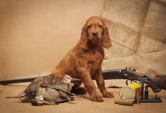 Puppy and hunting accessories Royalty Free Stock Photos