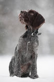 Puppy of hunting dog on the walking stock images
