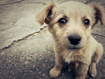 Puppy. Illustration of a homeless puppy on the street Royalty Free Stock Photography