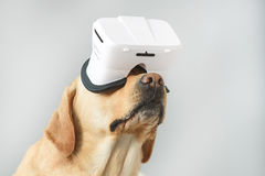 Puppy immersed in virtual reality. Isolated on light grey dog wearing VR glasses with copy space, imagination and simplicity concept stock photography