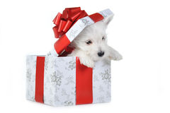 Free Puppy In Box Stock Photography - 12193222