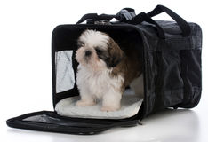 Free Puppy In Travel Carrier Royalty Free Stock Photo - 85718265