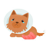 Puppy injury splinting leg  illustration Royalty Free Stock Photos