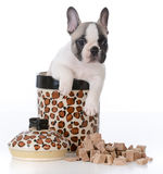 Puppy inside cookie jar Royalty Free Stock Photo