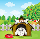 A puppy inside a doghouse near an apple tree Royalty Free Stock Photos