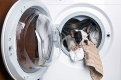 Puppy inside the washing machine Royalty Free Stock Photos
