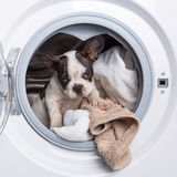 Puppy inside the washing machine Stock Images