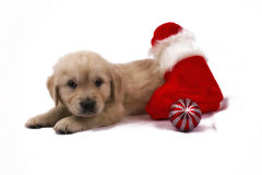 Puppy isolated with christmas toys and sock Royalty Free Stock Photos