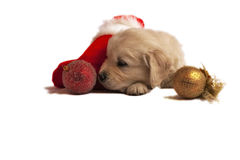 Puppy isolated on white with christmas sock, toys Royalty Free Stock Image