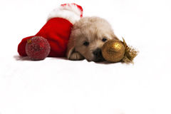 Puppy isolated on white with christmas sock, toys Royalty Free Stock Photos