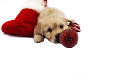 Puppy isolated on white with christmas toys Royalty Free Stock Photography