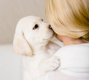 Puppy kisses the face of woman Royalty Free Stock Photography