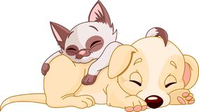 Puppy and Kitten. Cute Puppy and adorable kitten are sleeping Stock Photo