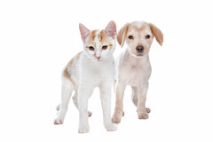 Puppy and kitten Royalty Free Stock Photo