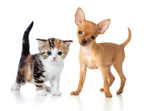 Puppy and kitten. On white Royalty Free Stock Photography