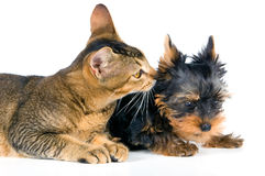 The puppy and kitten. On a neutral background Royalty Free Stock Photos