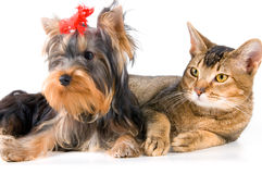 The puppy and kitten. In studio Stock Images