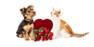 Puppy and Kitten Celebrating Valentines Day Royalty Free Stock Image