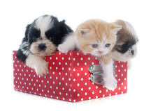 Puppy, kitten and chick. Persian kitten , puppy shih tzu and chick in front of white background Stock Photo