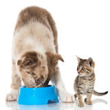 Puppy and kitten Royalty Free Stock Images