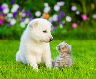 Puppy and kitten on green grass looking at each other Stock Image