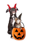 Puppy With Kitten in Haloween Pumpkin. Cute puppy and kitten wearing Halloween costumes with a pumpkin candy holder Stock Photos