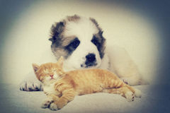 Puppy and kitten instagram Stock Photo